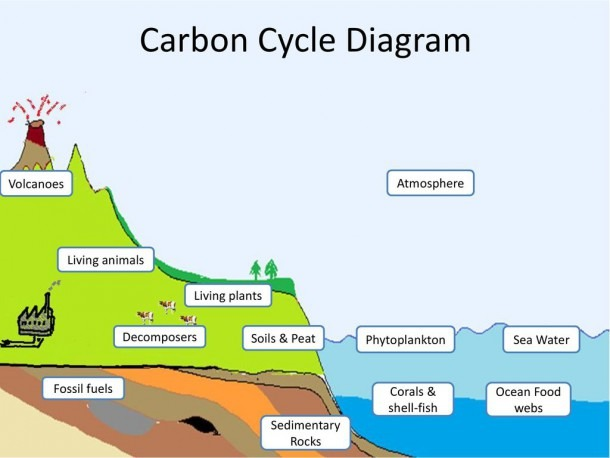 Carbon Cycle Activity Ib Biology