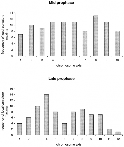 Curvature Maxima In Mid And Late Prophase Chromosomes  Forty