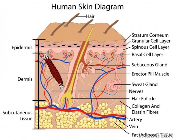 Skin Assessment Body Diagram Form