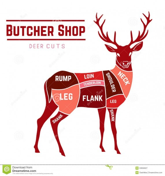 Deer Meat Cuts In Color Stock Vector  Illustration Of Animal
