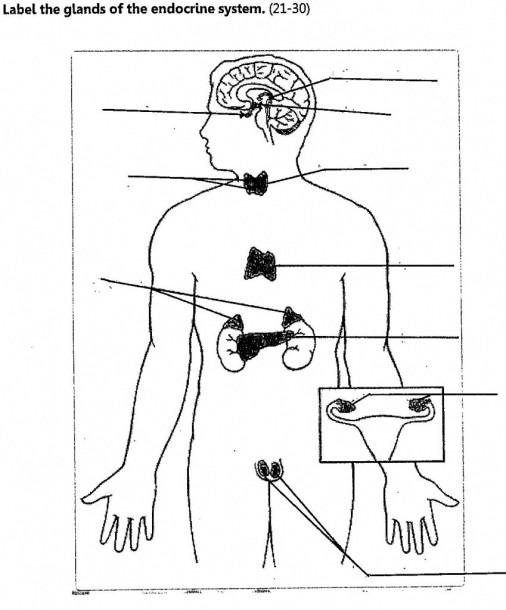 Endocrine System Diagram To Label Diagrams Diagram Endocrine Body