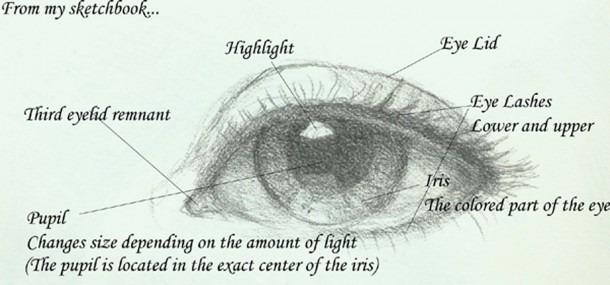 labeled eye diagram