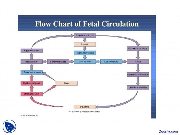 Fetal Circulation Chart