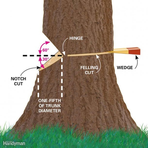 Cut Down A Tree Safely And Other Tree Cutting Tips — Family