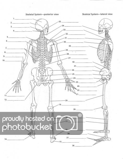 Fill In The Blank Skull Bones And Overall Skeletal System