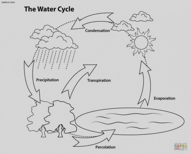 Empty Water Cycle