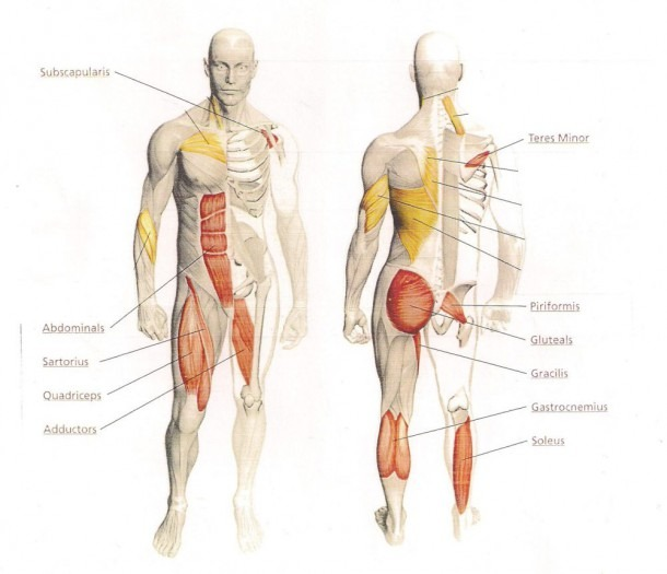 Hip And Pelvic Issues  Maybe Chinese Medicine Can Help – Lead