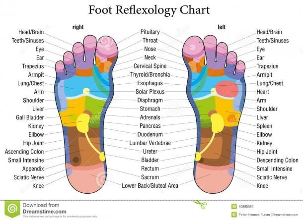 Foot Chart Stock Illustrations – 354 Foot Chart Stock