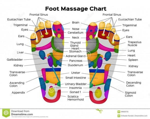 Foot Reflexology Chart With Description Of The Internal Organs And