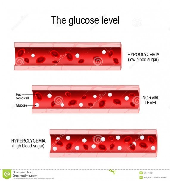 Glucose In The Blood Vessel Stock Vector