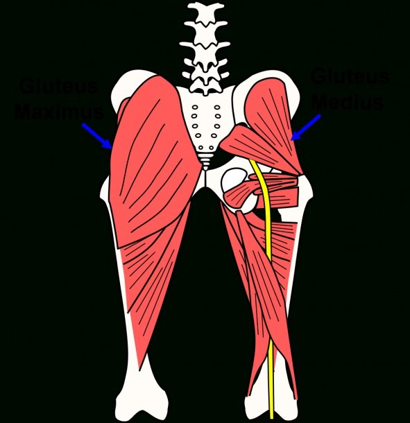 Glute Muscles Diagram And Is Sitting Destroying Your Butt Muscles