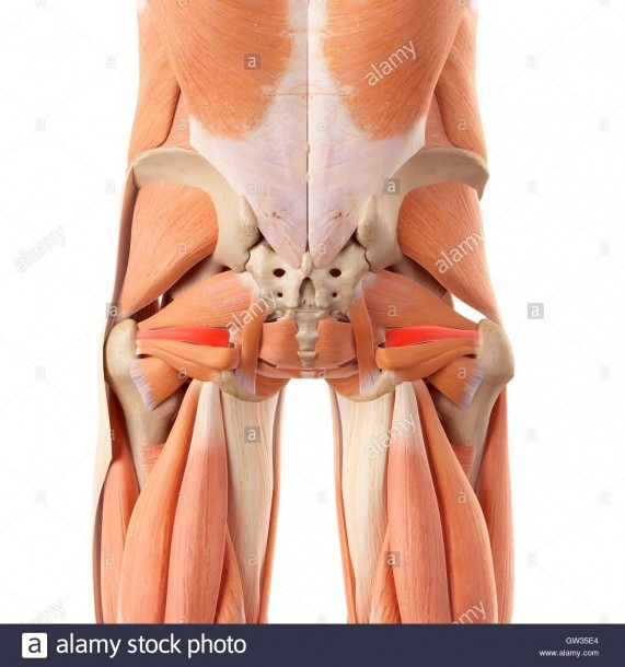 Anatomy Of Human Buttocks Stock Photos & Anatomy Of Human Buttocks