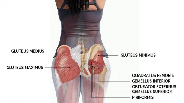 How To Work And Use Your Glute Muscles Correctly In Yoga
