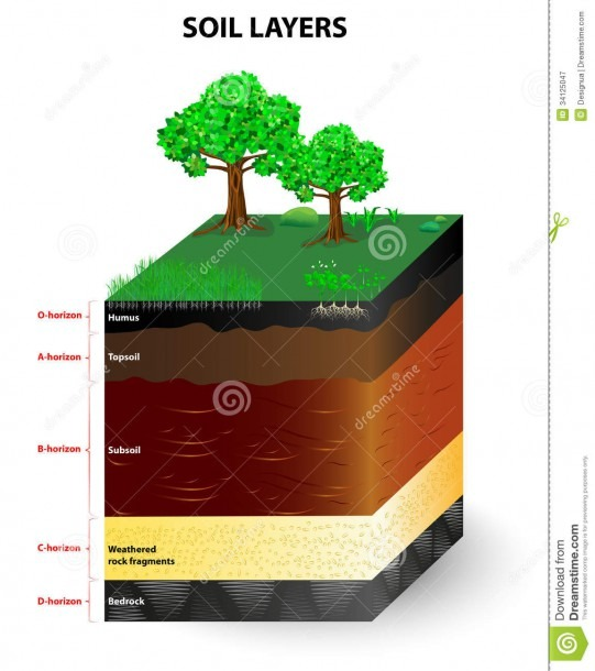 Layers Of A Soil Profile Stock Vector  Illustration Of Horizons