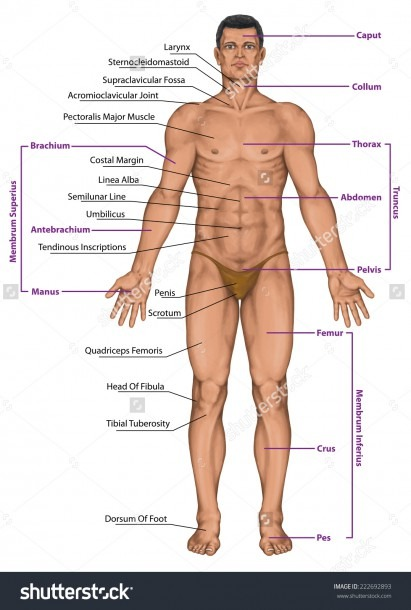 Diagram Of Man Body