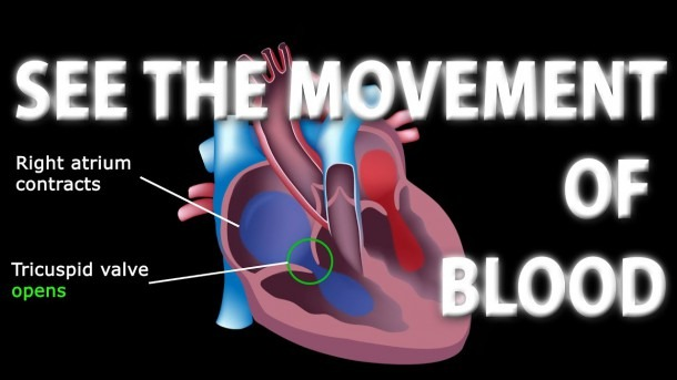 The Pathway Of Blood Flow Through The Heart Animated Tutorial