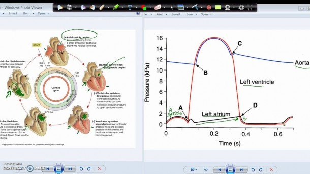 Wiggers Diagram And The Cardiac Cycle