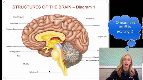 Ap Psychology Unit 3 Brain Notes 1