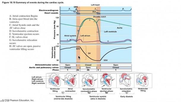 The Cardiac Cycle Demystified