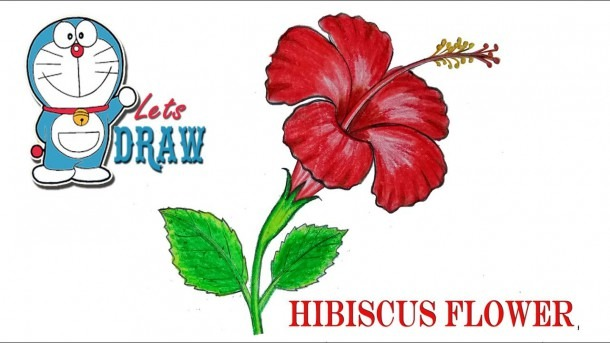 How To Draw A China Rose   Hibiscus Flower Step By Step (very Easy