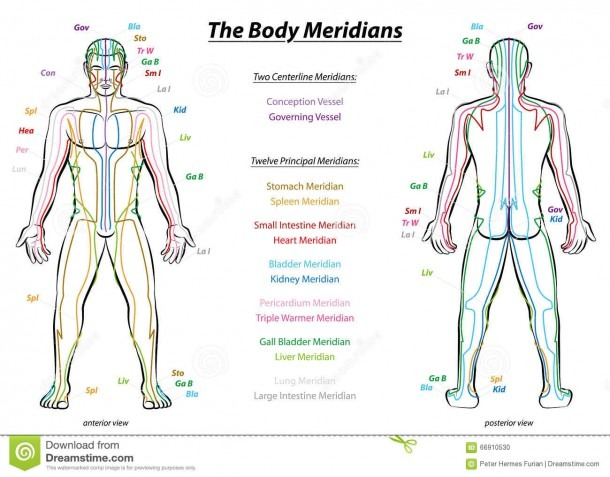 Meridian System Description Chart Male Body Stock Vector