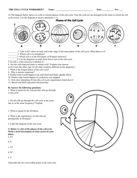 Mitosis Worksheet And Diagram Identification Standard B 2 ...