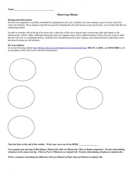 Meiosis Diagram Worksheet