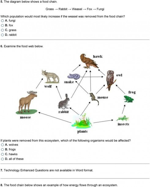 The Animals At Higher Levels Are More Competitive, So Fewer