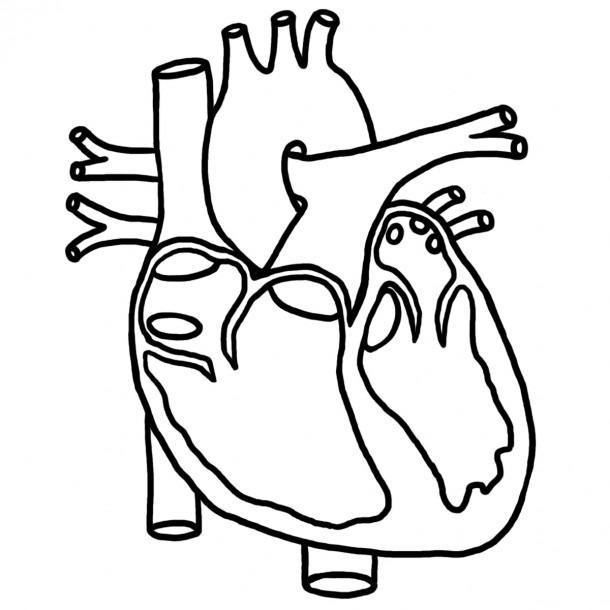 Free Human Heart Sketch Diagram, Download Free Clip Art, Free Clip
