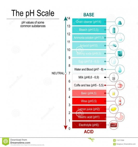 Ph Scale  Vector Diagram Stock Vector  Illustration Of Coffee