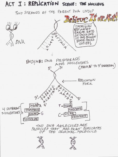 Protein Synthesis Diagram – Dna Structure And Replication