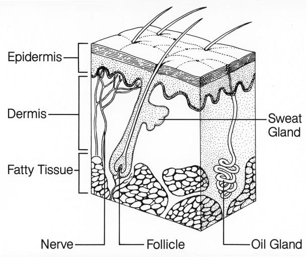 Skin  Image Details