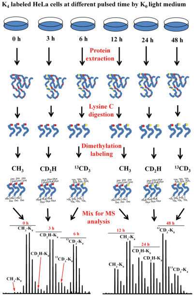 Schematic Diagram For Investigating The Dynamics Of Protein