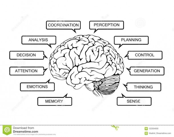 Scheme Of Functions Of The Human Brain Stock Illustration
