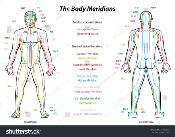 Meridian System Chart Male Body Principal Stock Vector (royalty