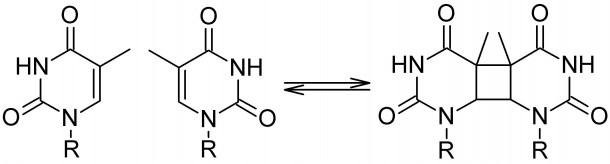 Formation And Repair Of Cyclobutane Pyrimidine Dimers – Light And