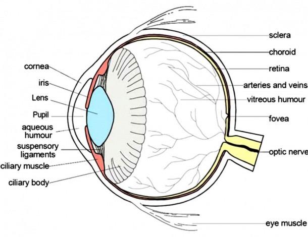 Eye Diagram Quiz Game