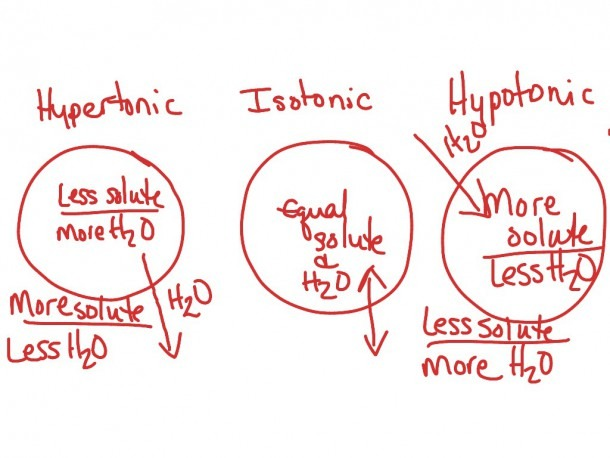 Venn Diagram Diffusion And Osmosis