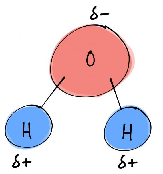 Bi·ol·o·gy (bīˈäləjē)   Structure Of A Water Molecule