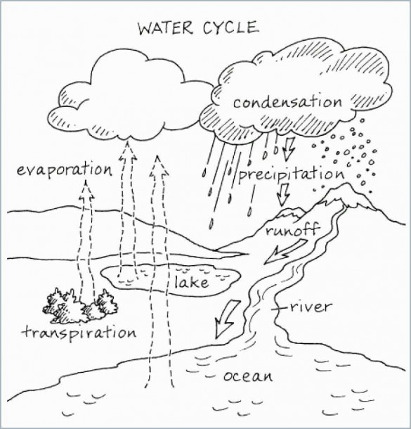 Water Cycle Coloring Page Cute Water Cycle Worksheet Water Cycle