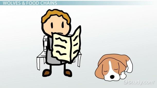 Wolf Food Chain