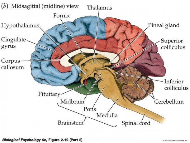 Unit 3 All About The Brain